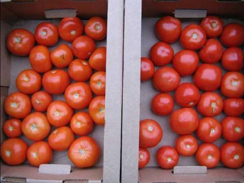 Уборка дозаривание и хранение плодов