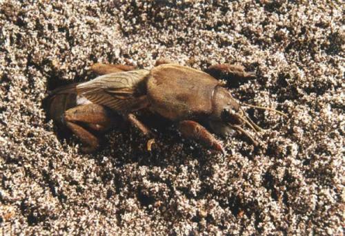 сбор гусениц ловля насекомых относится к методам борьбы с ними