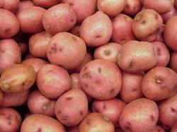 Выбор сорта картофеля