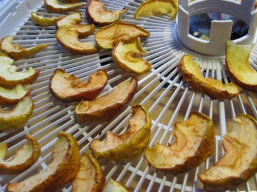 Сохраним урожай яблок – сушка.