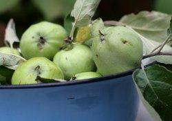 Черничное желе с яблоками
