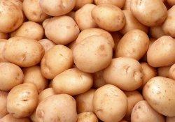 Выращивание позднего картофеля
