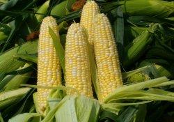 Стерилизованная молодая кукуруза