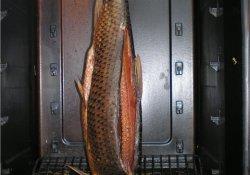 Устройство для холодного копчения рыбы