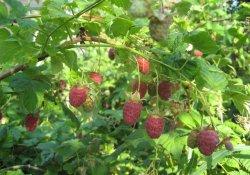 Cборы лекарственных растений № 36 - 43