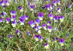 Cборы лекарственных растений № 173 - 182