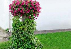 Вертикальное озеленение на садовом участке