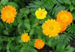 Cборы лекарственных растений № 266 - 274
