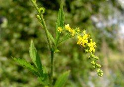 Cборы лекарственных растений № 275 - 278
