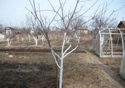 Советы по рациональной посадке деревьев и кустарников