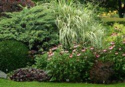 Формирования пейзажа садового участка