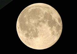Влияние Луны на  развитие растений