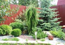 Декоративные деревья и кустарники  на садовом участке