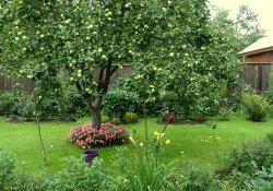 Выращивание плодовых деревьев