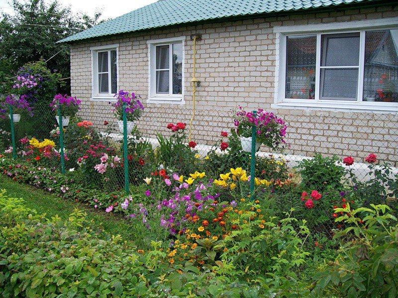 Цветы возле дома фото