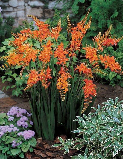 Каталог цветов: названия и фото, описание цветов, виды и сорта 66