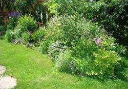 Пионы в озеленении садового участка