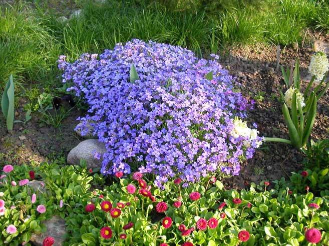 Многолетние цветы для горки