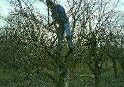 Можно ли обойтись без обрезки деревьев