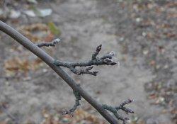 О закономерностях роста дерева