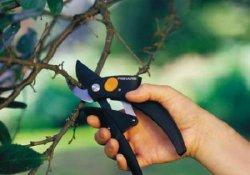 Проведение зеленых операций на молодых деревьях