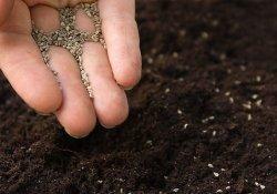 Ранний посев семян