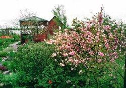 Декоративные кустарники для озеленения: миндаль и луизиания