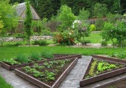 Декоративный огород – радость для гурманов и эстетов