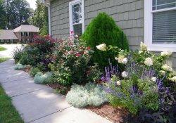 Садовые композиции декоративно-лиственных растений