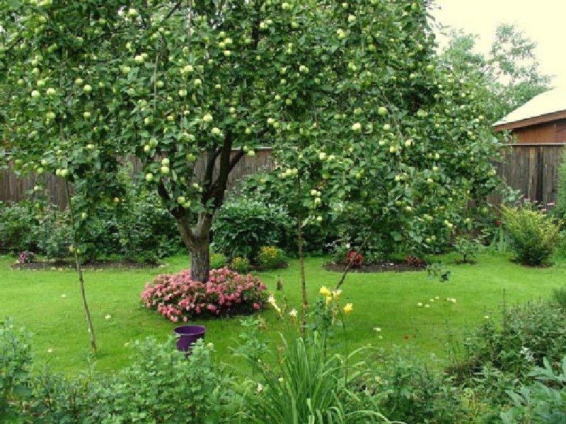 Можно ли сажать плодовые деревья в огороде 52