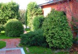 Декоративность древесных растений в насаждениях