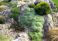 Каменные породы для альпинария