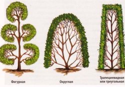 Обрезка и стрижка живой изгороди
