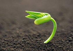 Как ускорить прорастание семян