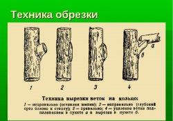 Профилактическая обрезка  сибирских сортов  яблонь